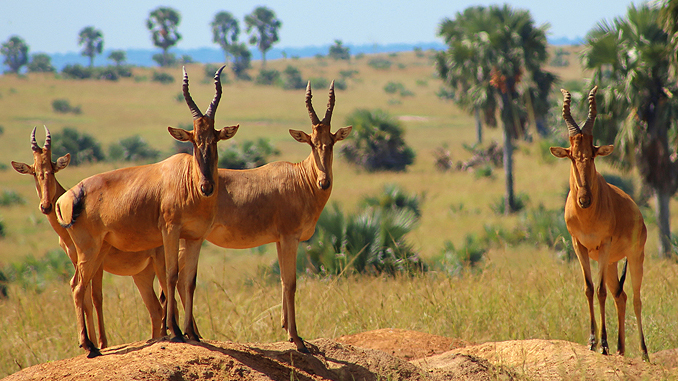 Biodiversität in akuter Gefahr