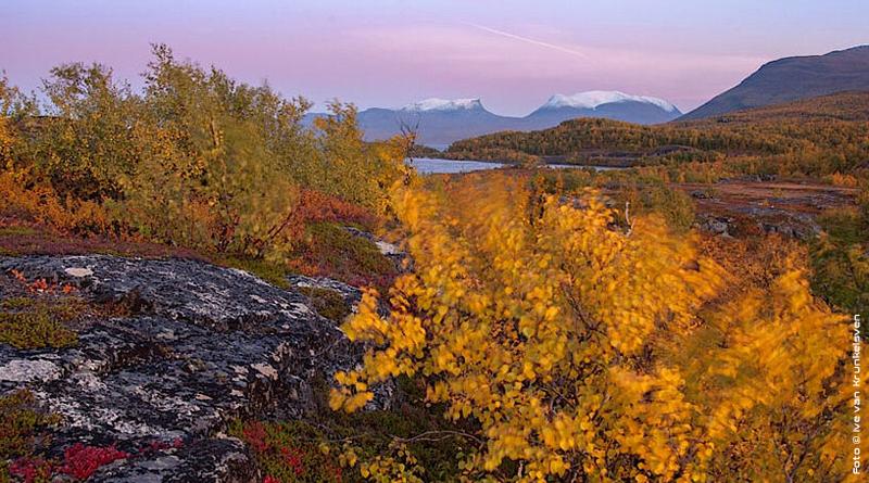 Foto: Üppige Vegetation der Permafrostregion. (© Ive van Krunkelsven)