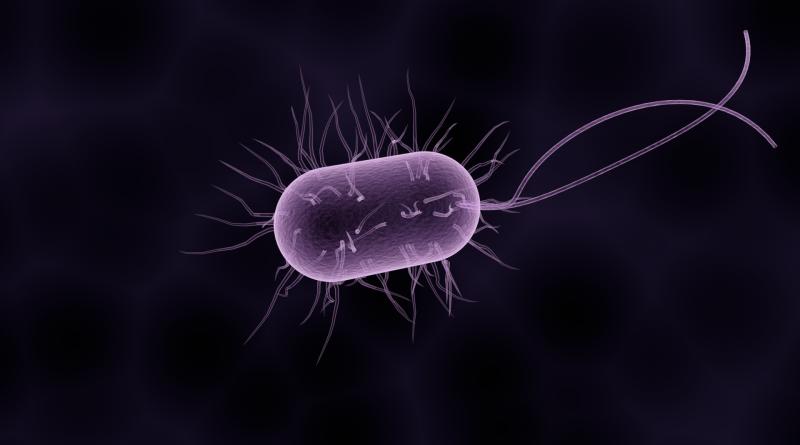 Ein Bakterium unter dem Mikroskop