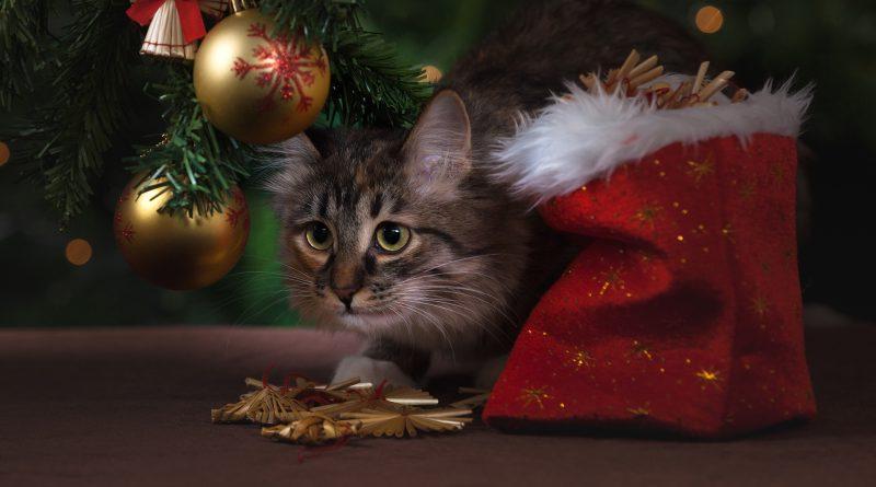 Katze sitzt unter dem Weihnachtbaum