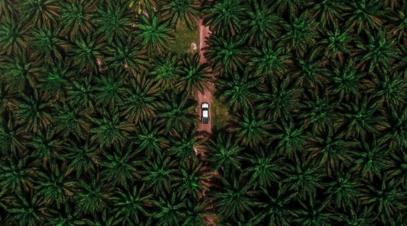 Auto fährt durch eine Palmöl-Plantage