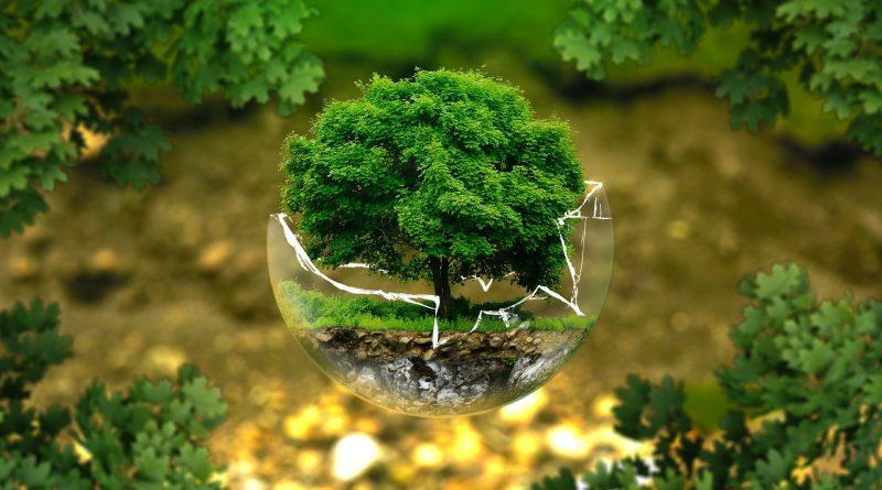 Ein kleiner Baum