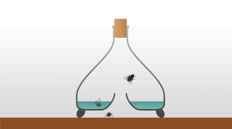 Darstellung eines Fliegenglases