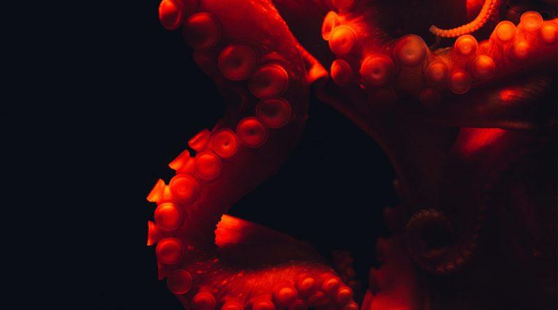 Oktopus in rot, Detailaufnahme