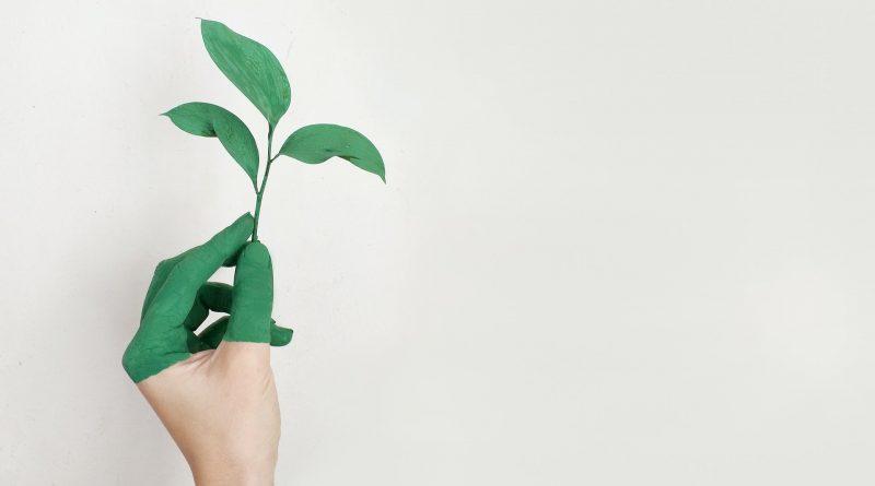 Grün angemalte Hand hält eine grüne Pflanze