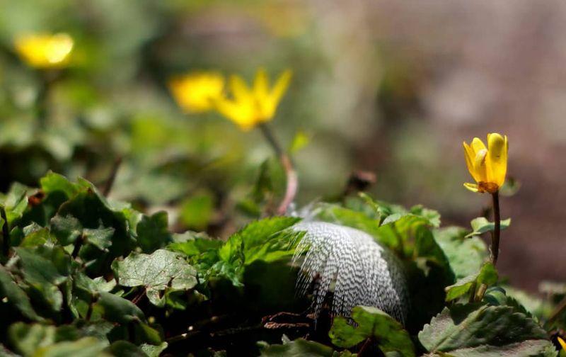 Eine weiße Feder liegt inmitten gelben Blumen und grünen Blättern