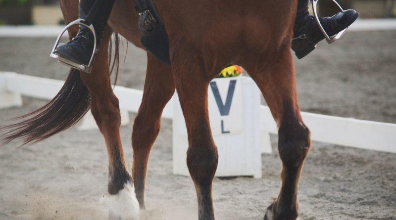 Nahaufnahme eines Reiters auf einem braunen Pferd in einer Arena