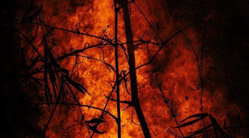 Feuer in einem Wald, Nahaufnahme