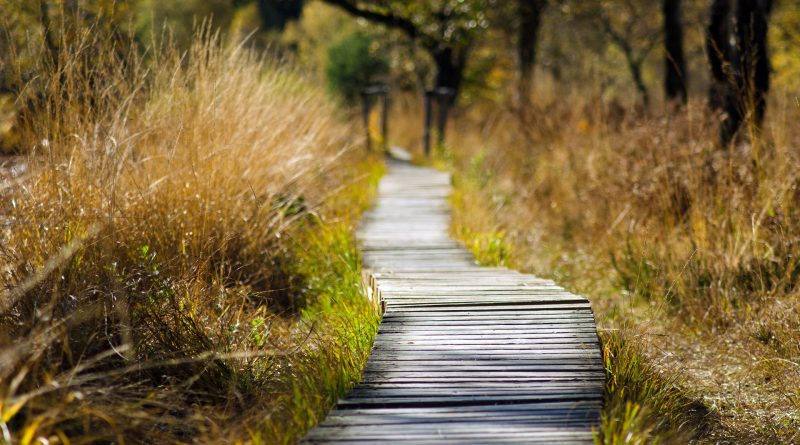 Holzpfad, der in einen Wald führt