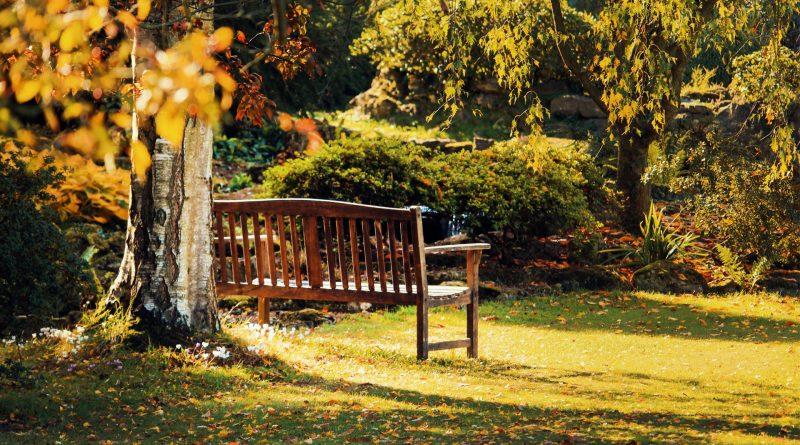 Eine Parkbank, die im Grünen halb versteckt hinter einem Baum steht
