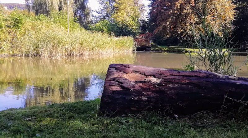 Baumstamm liegt im Gras, dahinter ein See
